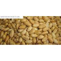 Large picture roasted and salted peanut kernels