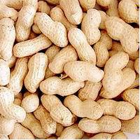 Large picture Chinese peanut in shell