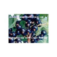 Large picture Blackcurrant extract powder