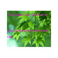 Large picture Sodium Copper chlorophyllin