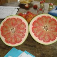 Large picture Pomelo