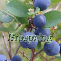 Large picture Blueberry extract (Origin of Material: China)