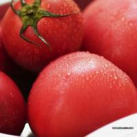 Large picture Fresh Tomatoes
