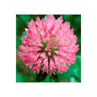 Large picture Red Clover Extract Powder Cas no:491-80-5