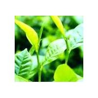Large picture Green Tea Extract Powder Cas no:989-51-5