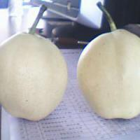 Large picture su pear