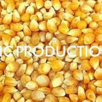 Large picture Yellow Corn