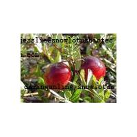 Large picture Cranberry OPC