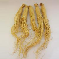 Large picture Panax Ginseng Extract/Ginseng Extract