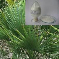 Large picture Saw Palmetto Powder Extract