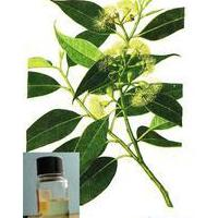 Large picture Eucalyptus oil