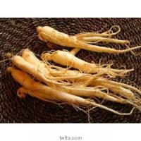 Large picture Ginseng Root Extract 80% Ginsenosides