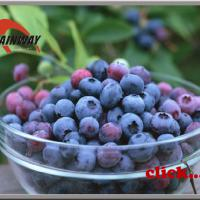 Large picture Bilberry Extracts