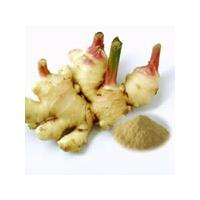 Large picture Ginger Root Extract 5% Gingerols