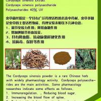 Large picture Cordyceps Sinensis Extract polysaccharides