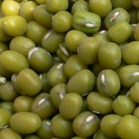 Large picture green mung beans