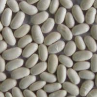 Large picture white kidney beans