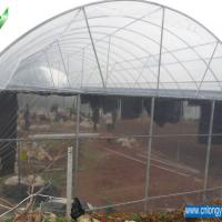 Large picture Tunnel Greenhouse