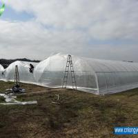 Large picture Multi-Span Greenhouse