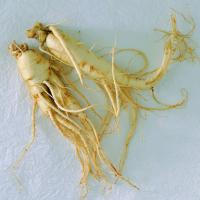 Large picture Panax Ginseng Extract
