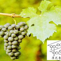 Large picture Grape Seed extract & 95% OPC
