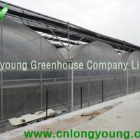 Large picture Gothic Plastic Film Multi-Span Greenhouse