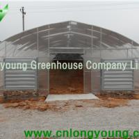 Large picture Economical Tunnel Greenhouse