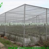 Large picture Netting House