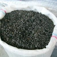 Large picture Sunflower seeds for oil