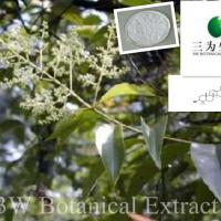 Large picture Ligustrum Extract Oleanolic Acid