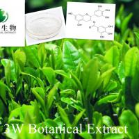 Large picture Green Tea Extract