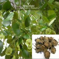 Large picture Red sandal tree seeds ( Pterocarpus santalinus )