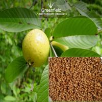 Large picture Guava fruit seeds ( Psidium guajava )