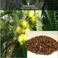 Large picture Aonla fruit  seeds ( Emblica officinalis )
