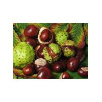 Large picture Supply Horse Chestnut Extract Powder 20%
