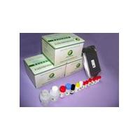 Large picture Salbutamol ELISA Test Kit