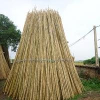 Large picture vietnam best price bamboo poles